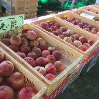 山梨で桃狩りとブドウ狩りとワイン作りを体験してきたよっ!